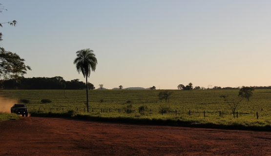 Сельское хозяйство Бразилии